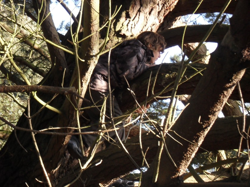Tree climbing, Holkham Meals