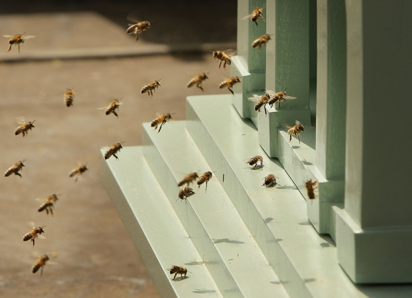 38-degrees-bees