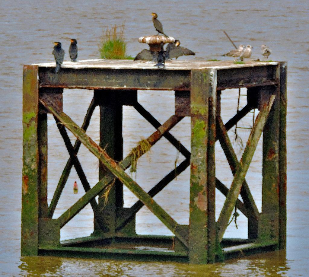 Cormorants and Calendars