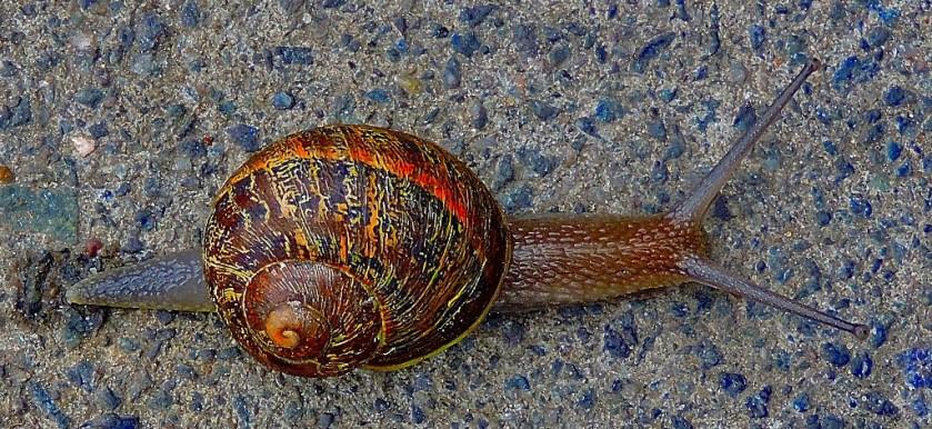 snail-cb