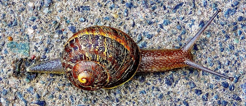 snail-contrast-enhanced