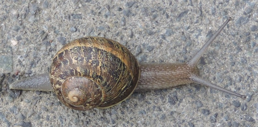 snail-cropped