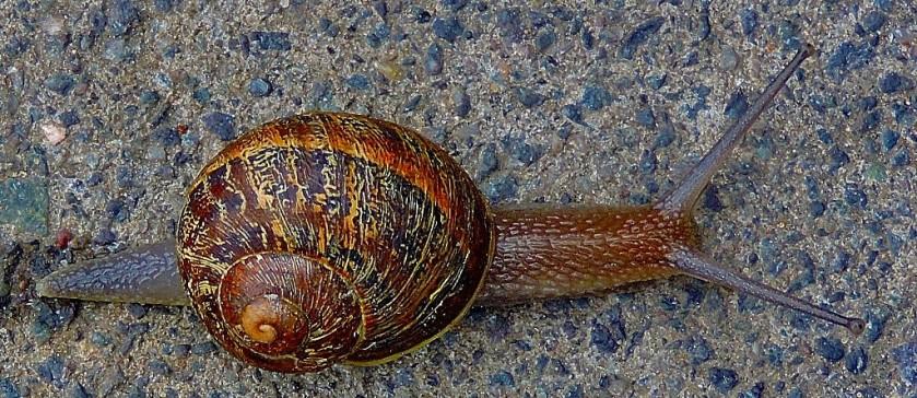 snail-normal-edit