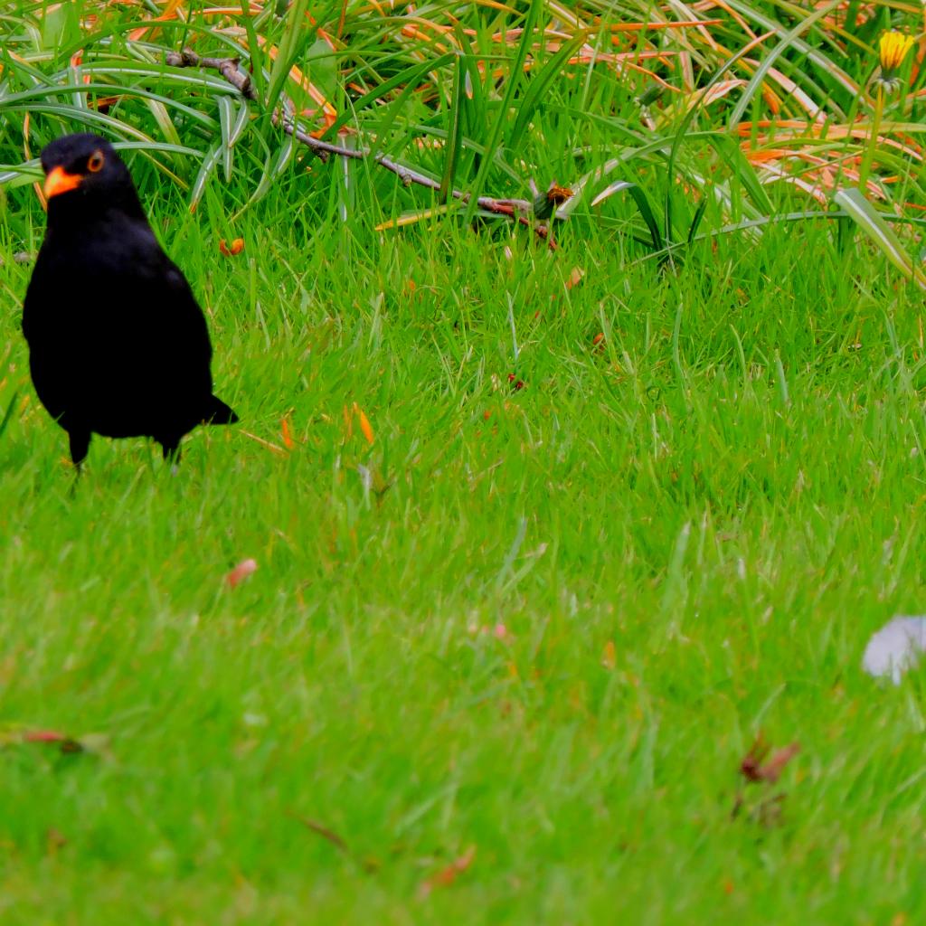 Blackbird and flower