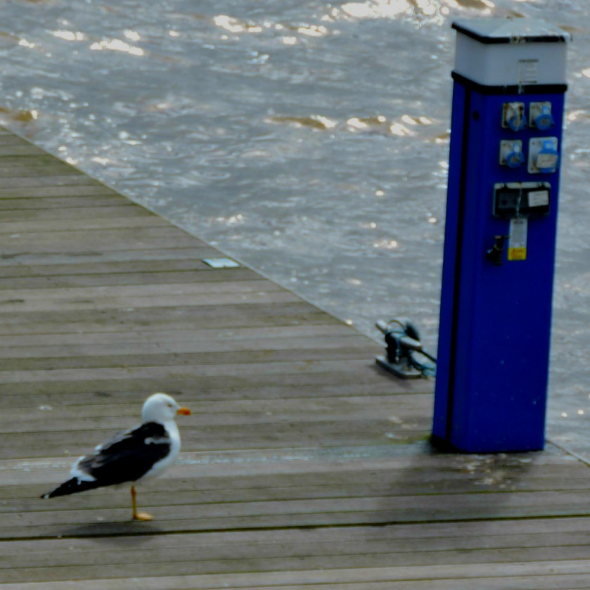 gull on jetty