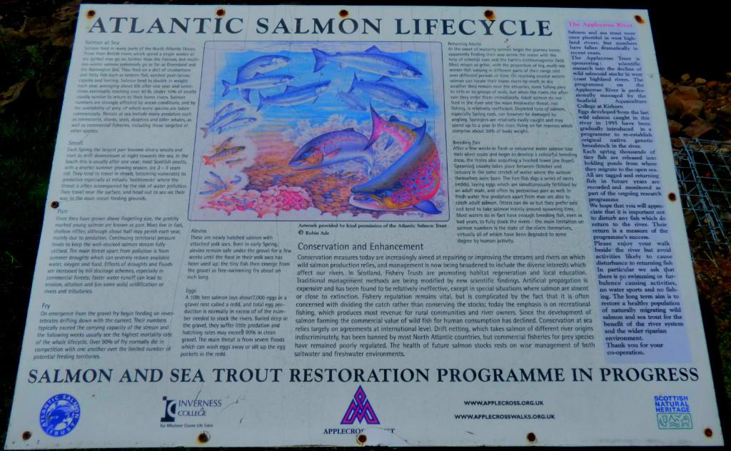 lantic salmon info board