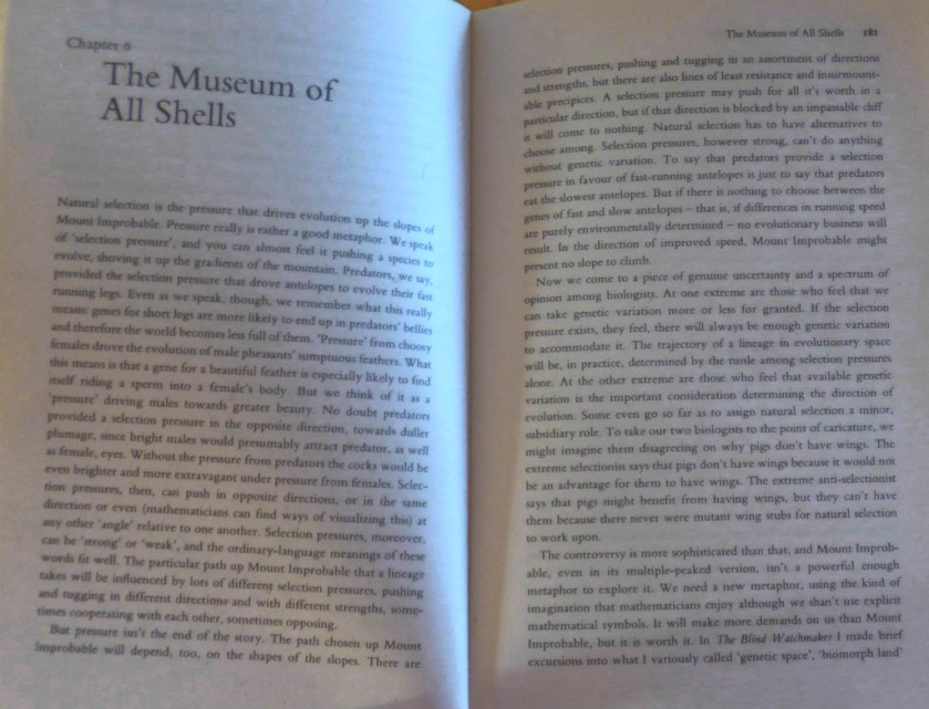 Museum of All Shells text