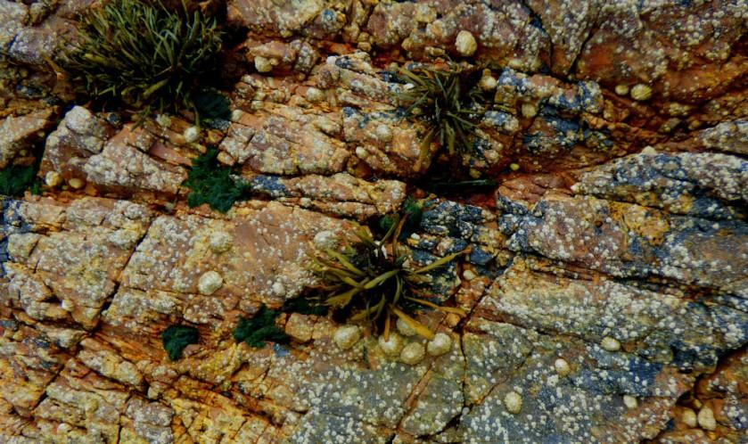 rockplants
