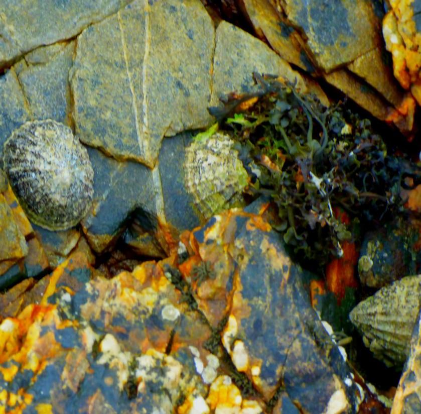 Shells - 3