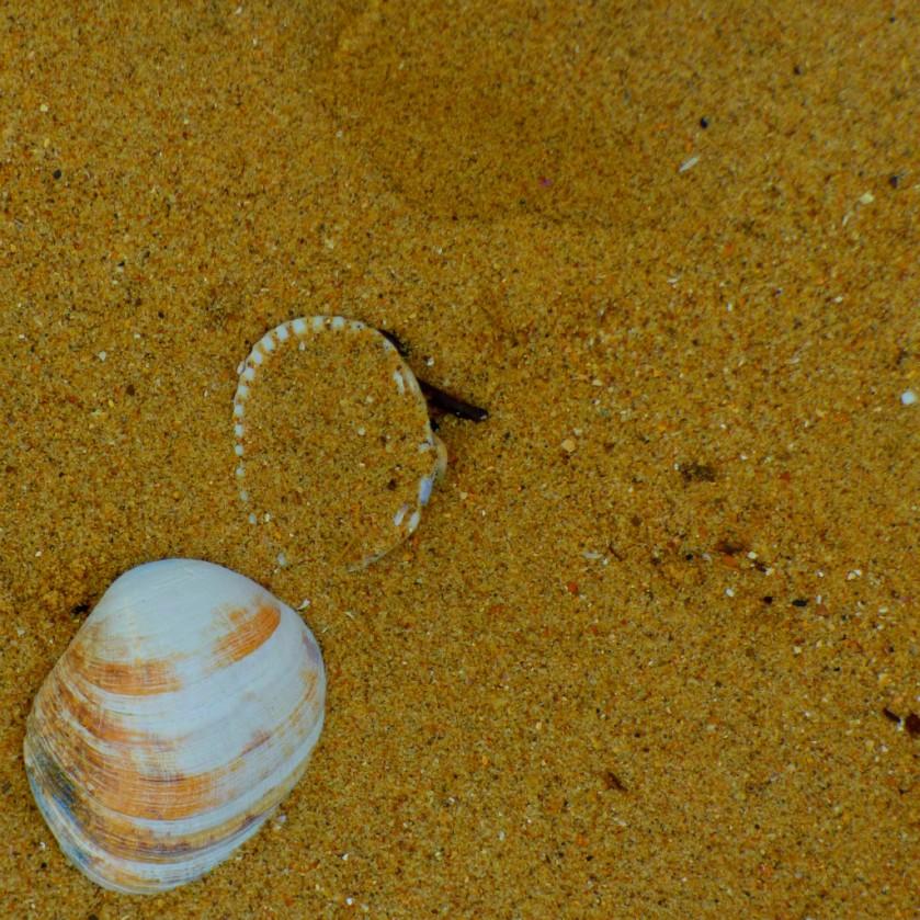 Shells OHB