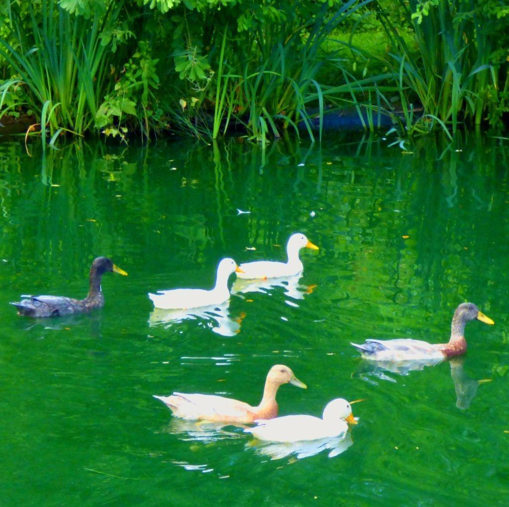 Avian flotilla