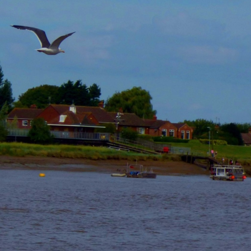 Flying gull and ferries