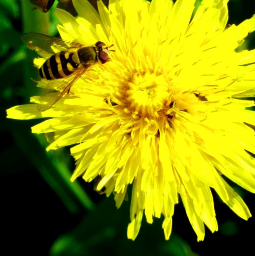 Pollinator 1