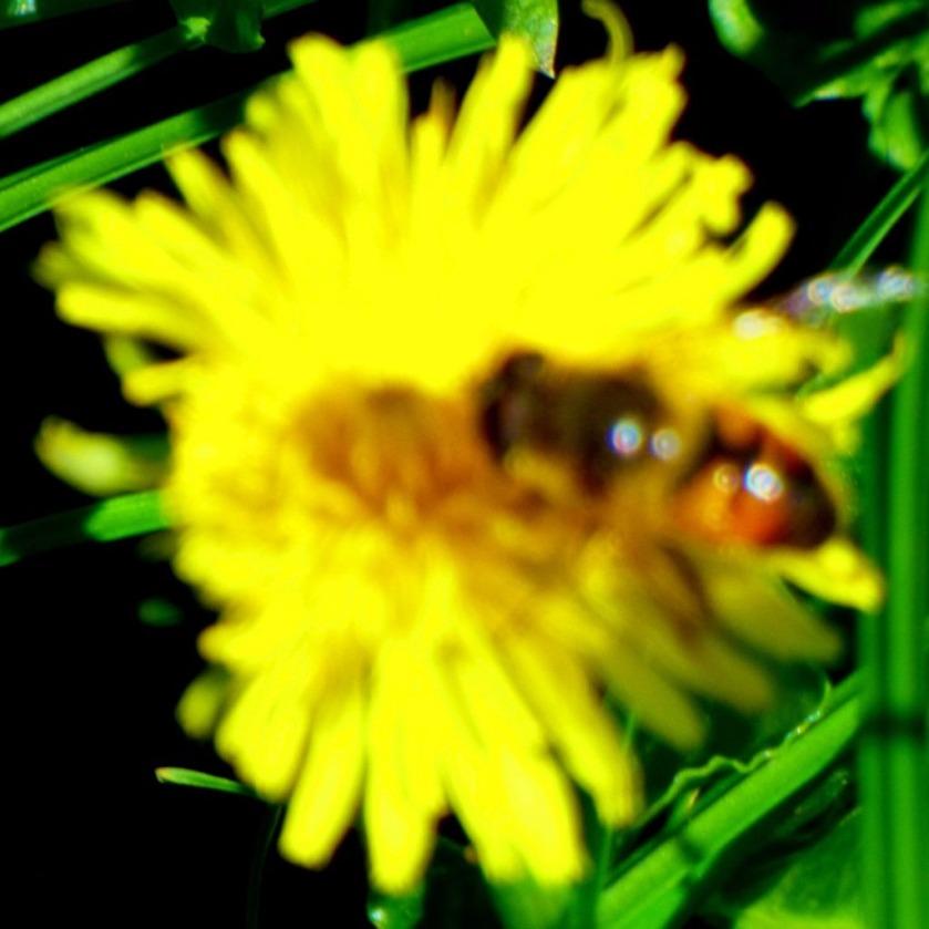 Pollinator2