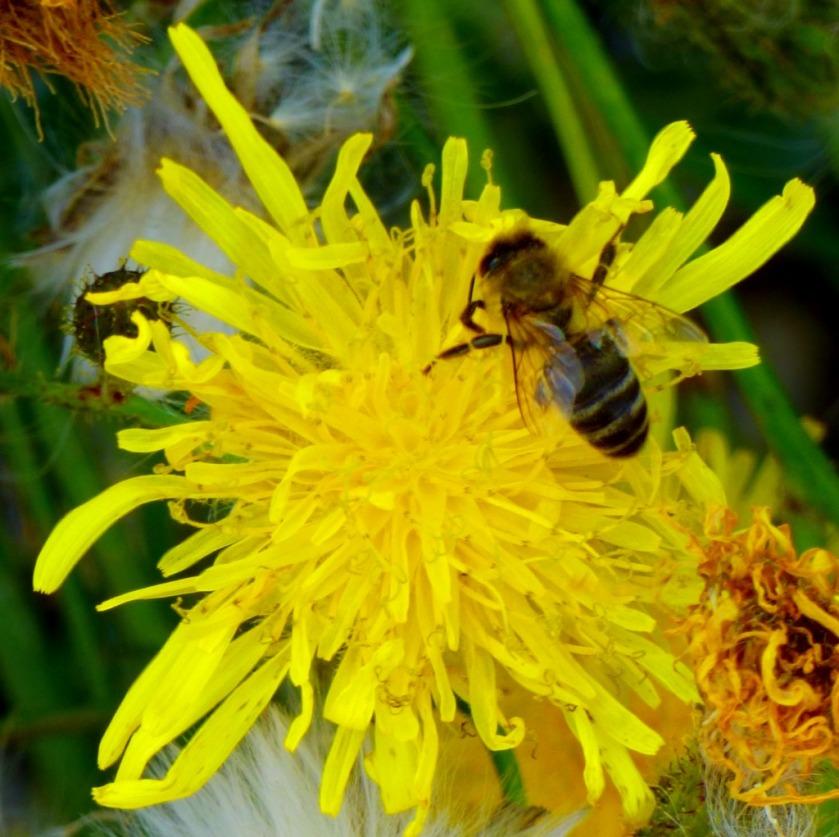 Pollinator3