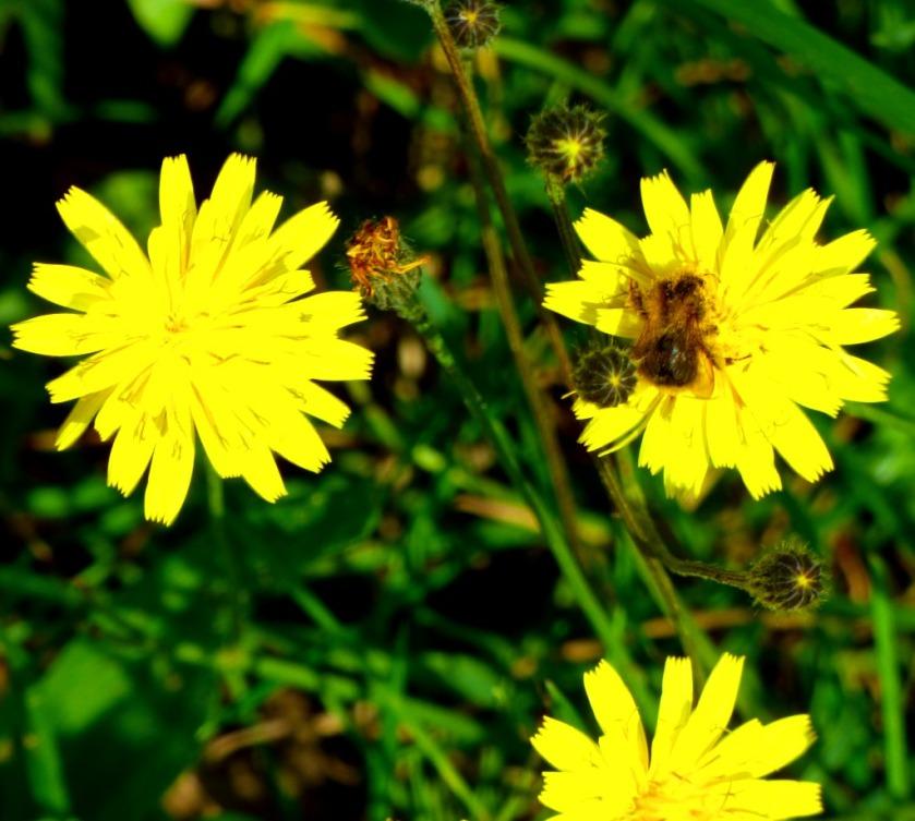 Pollinator4