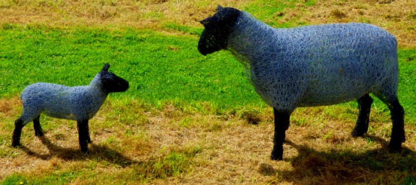 wire sheep