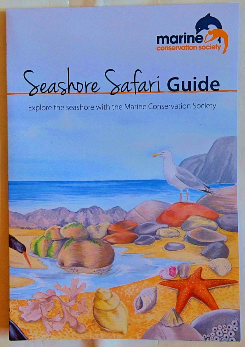 Seashore Safari Guide cover