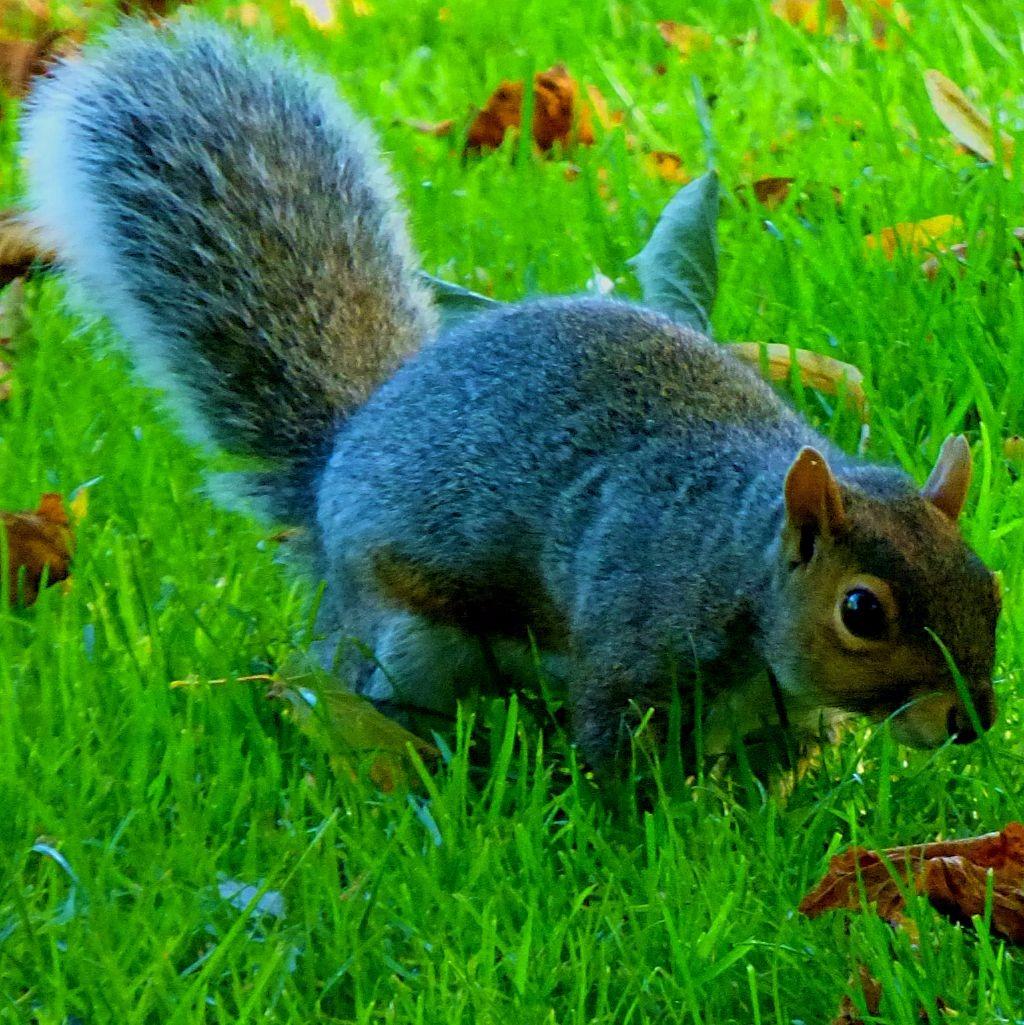 Squirreliii
