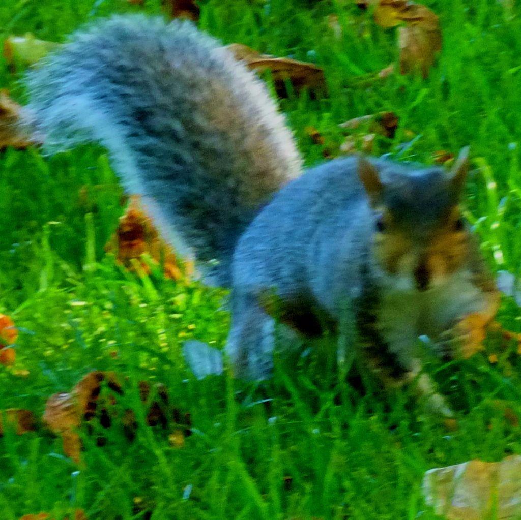 Squirreliv