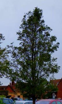 BLC tree 4