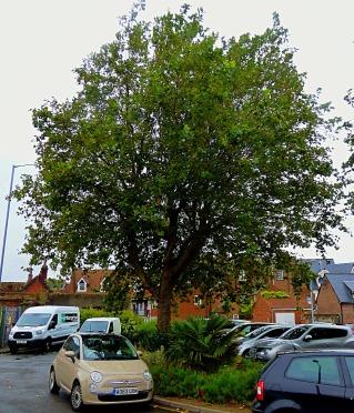 BLC tree 6