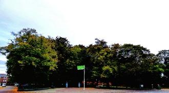 Broadwalk tree