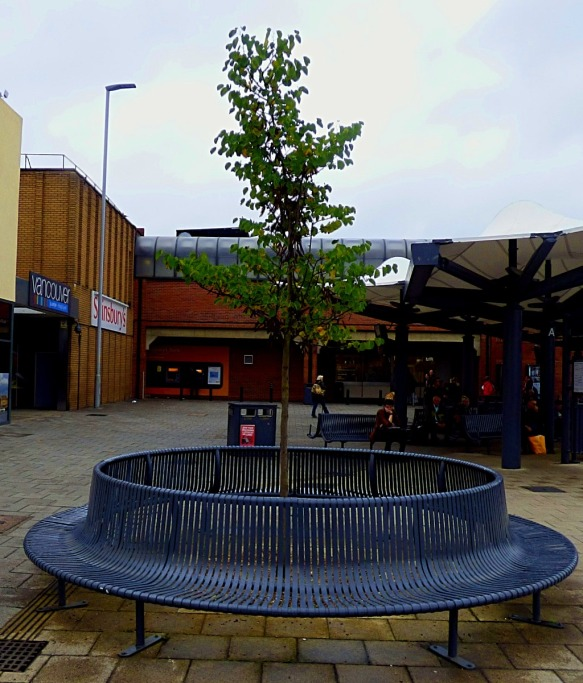 bus station tree 2
