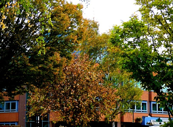CC trees