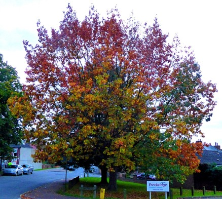 Changing tree, Goodwins Road