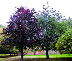 Contrasting trees, the walks