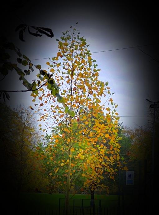 Denuded tree