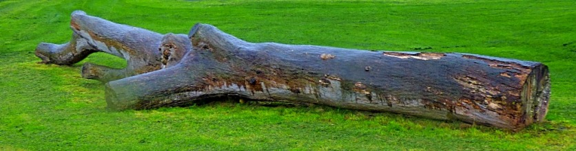 Ex-tree