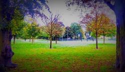 framed trees