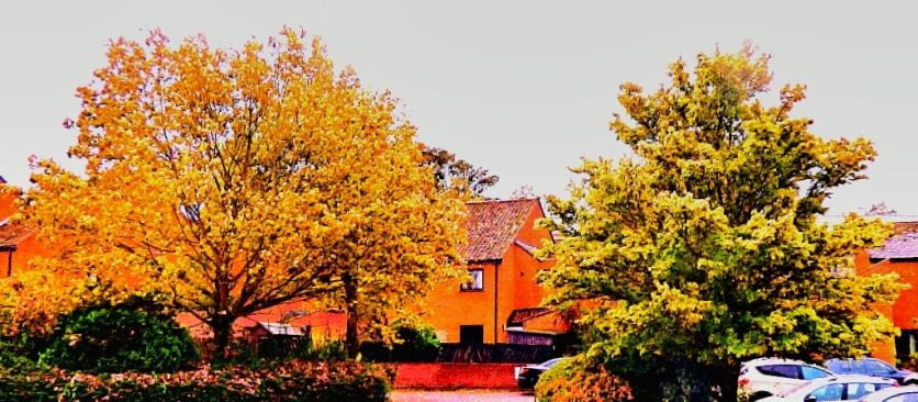 Gatepost Trees