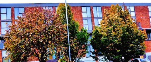 Hillington Square trees