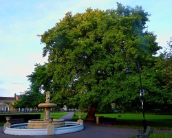 Horse chestnut, the walks
