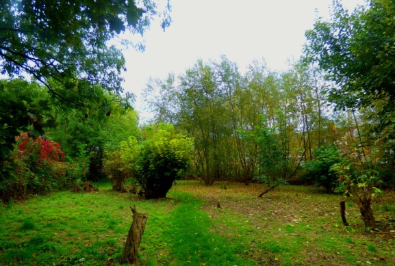 Kettlewell Lane woods
