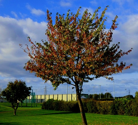 LS trees