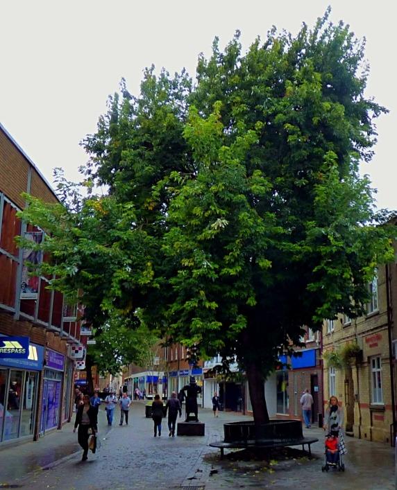 NCS tree