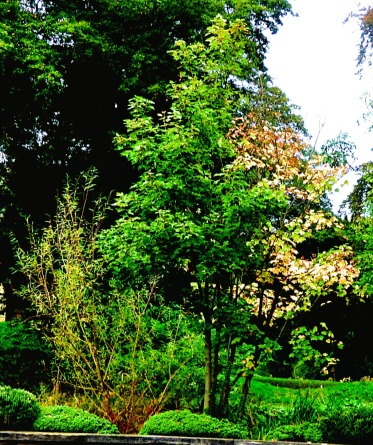 piebald tree
