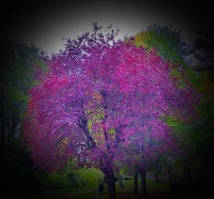 Purple Tree, nr Kettlewell Lane