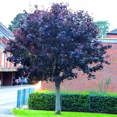 small tree, Goodwins Road