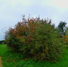 Small Tree, Harding's Pits