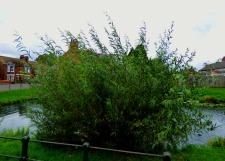 Small tree III