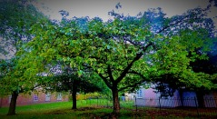 Small tree, the walks