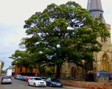 St Nicks trees II