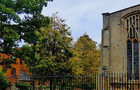 St Nick's trees V
