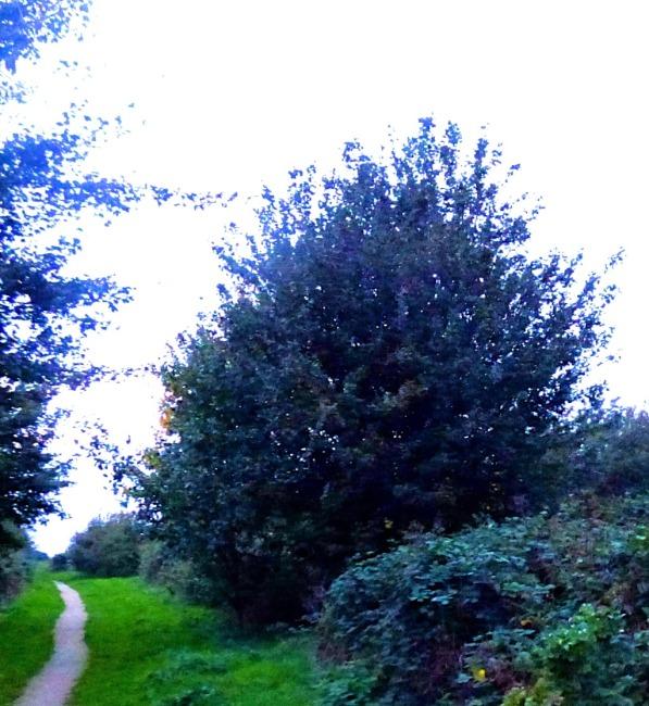 tree and path II