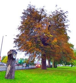 Tree and stump, the walks